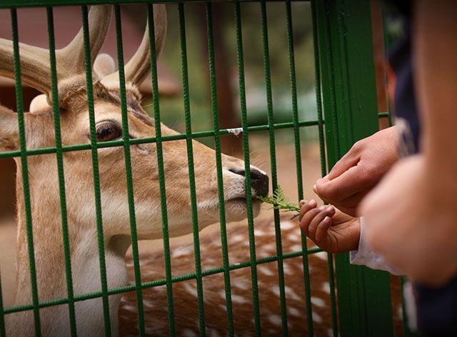 Daha önce Kültürpark'ta bulunan hayvanat bahçesi gelişen Bursa için yetersiz kalınca 10 Kasım 1997'de, Botanik Parkı'nın yanında 200.000 m2'lik alanda hayvanat bahçesi kurulma çalışmaları başlatılmış ve 10 Kasım 1998'de de hizmete açılmıştır.  Bursa Zoo, ilk aşamada Türk köyü, ayı-kurt, yırtıcı kuşlar, su kuşları, lama, yabani eşek ve deve bölümleriyle açılmış, bunları arslan, leopar, maymun ve Afrika savanları bölümleri izlemiştir.
