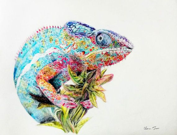 Colored Pencil Drawing Chameleon Original Animal Art Animals Drawings And Pencils