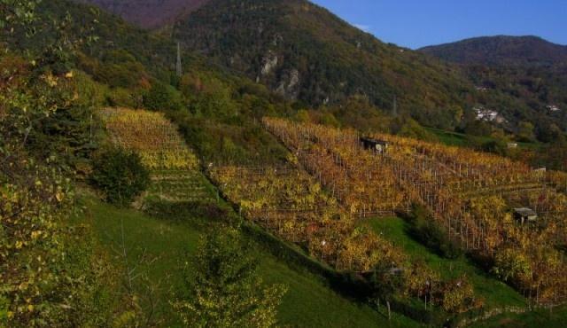 Concorso Internazionale Vini di Montagna 2012: ecco i migliori vini italiani