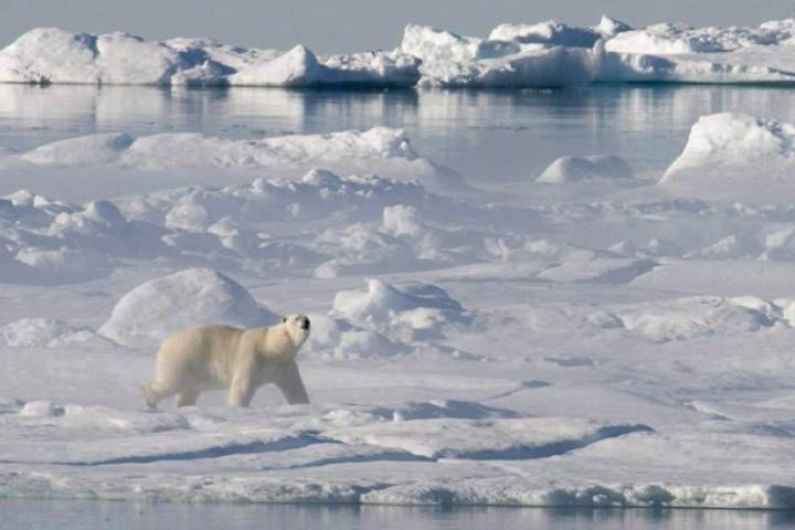 What's happening under thinning Arctic ice needs more exploration, scientists say. (Photo via THE CANADIAN PRESS/Jonathan Hayward)