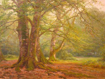 New Forst Woodland 1907