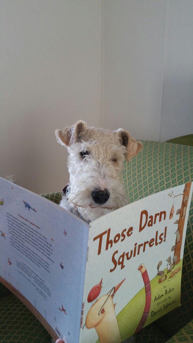 1950 best Best Dog Training images on Pinterest | Dog obedience ...
