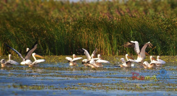 Supreme Adventure: Danube Delta - Private Tour - 6 days - Touring Romania