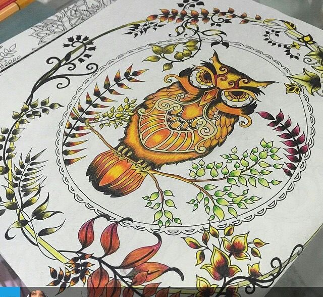 Owl Enchanted Forest Coruja Floresta Encantada Johanna Basford PicturesColouringColoring BooksAdult