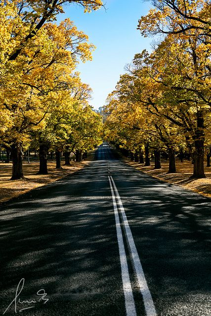 Elm Avenue, Armidale, NSW
