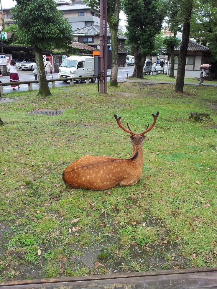 나라 공원. 귀여운 사슴의 뒷태.ㅎㅎ