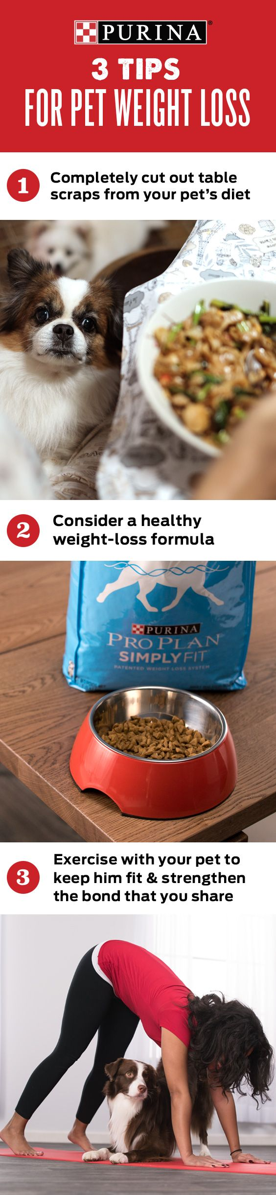 Is my dog overweight? My dog is overweight, what do I do? Find the answers to these questions & more by clicking through to Purina's article on how to know if your dog is overweight & how to help your dog lose weight. By conducting a quick body score check, re-assessing his diet & mixing up his physical activity, you can make strides in your dog's weight loss journey. A healthy life starts with a healthy weight. Learn more about helping your pet start living his best possible life at…