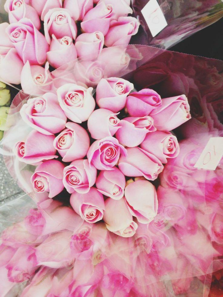 Pink bodega roses