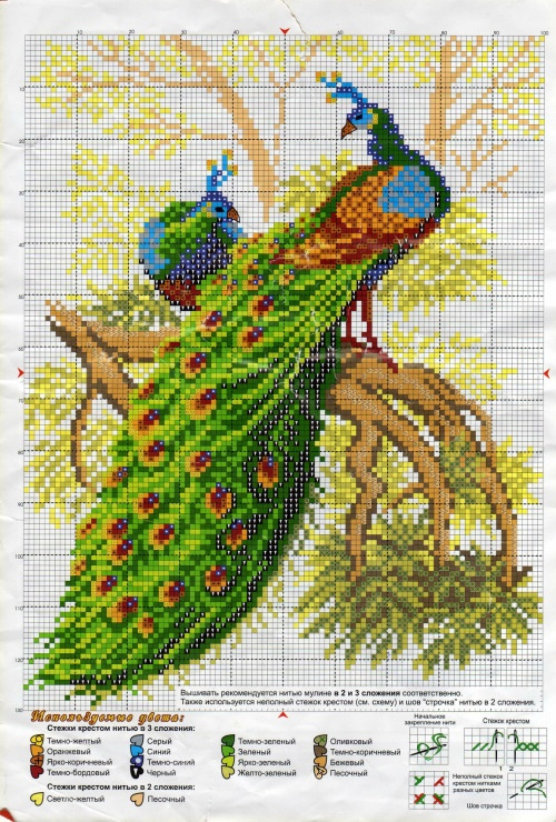 Cross-stitch Peacock...   Gallery.ru / Фото #82 - Отшитые схемы 1 - livadika