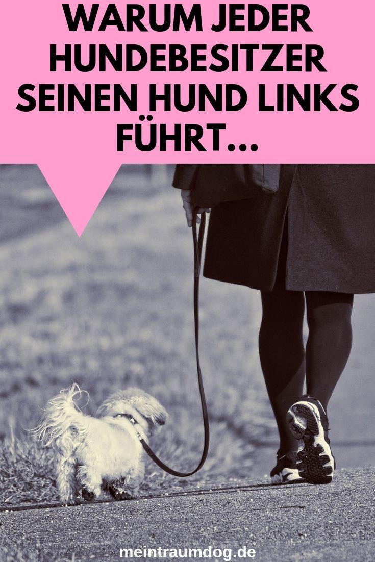 Warum Hund Links Fuhren Hunde Hundetraining Hundehaltung