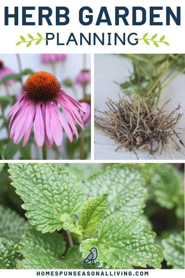 How To Plant A Medicinal Herb Garden Medicinal Herbs Garden