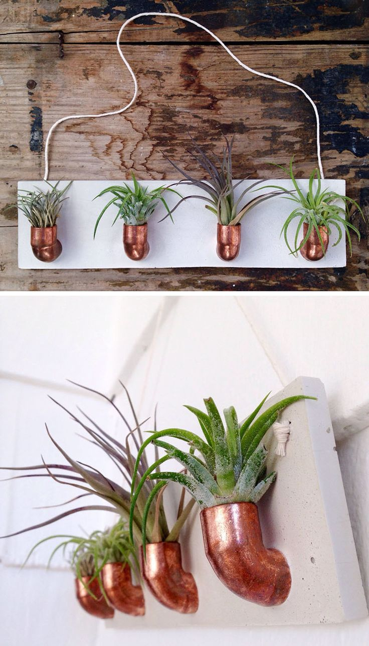 25 best ideas about air plants on pinterest hanging air for Air plant holder ideas