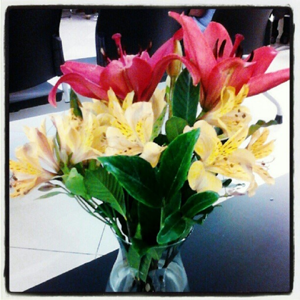Flores! #asminapira - @macfa40- #webstagram