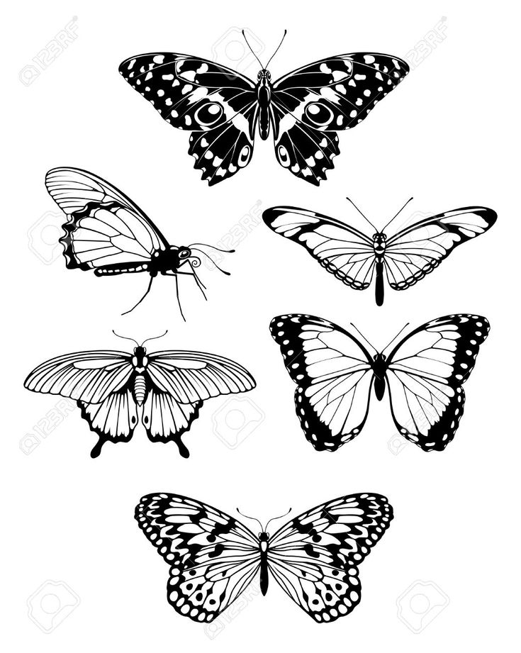 Out Line Art Design : Best small butterfly tattoo outline drawing images on