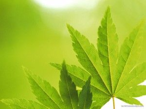 Green leaves, Backgrounds and Leaves on Pinterest