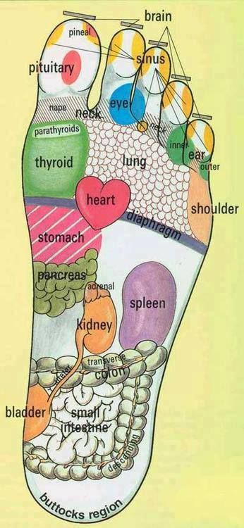 pretty good foot reflexology chart