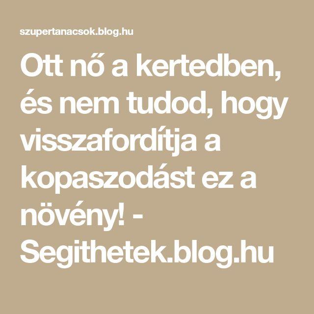 Ott nő a kertedben, és nem tudod, hogy visszafordítja a kopaszodást ez a növény! - Segithetek.blog.hu