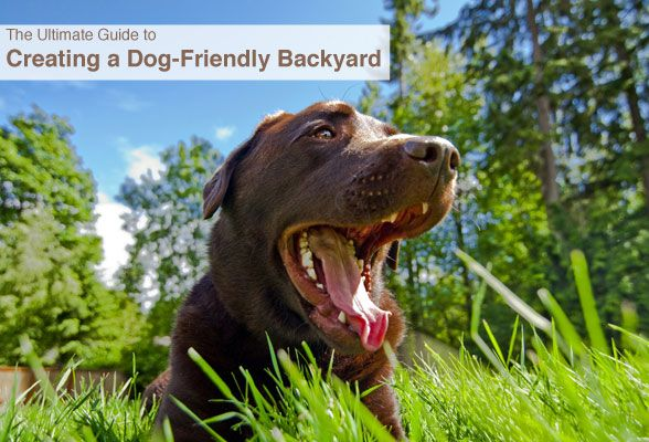 the ultimate guide to creating a dog friendly backyard