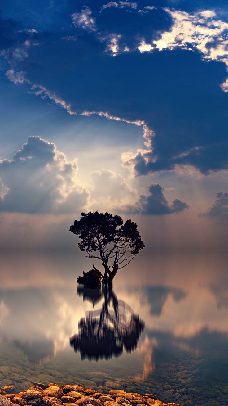 Sunset Sunbeam Earth Tree Trees cloud lonely tree nature ocean reflection stone sunbeam tree twilight (1080x1920) Mobile Wallpaper Sunset Sunbeam Earth Tree Trees cloud lonely tree nature ocean reflection stone sunbeam tree twilight (1080x1920) Mobile Wallpaper