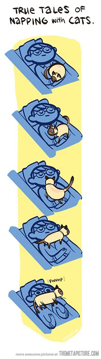 Napping with cats…