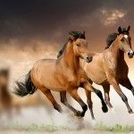 Horses Running Free Hd Wallpapers - http://www.freehdwallpapershq.com/horses-running-free-hd-wallpaper/