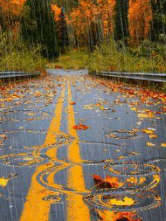 И дорога хоть куда, но залИла всё вода.