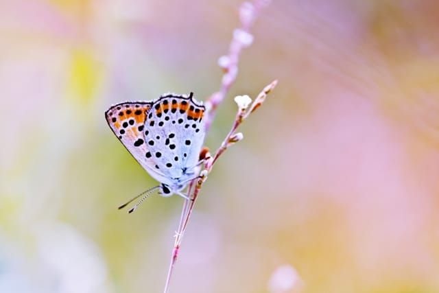 бабочка de Kristina Manchenko pe 500px