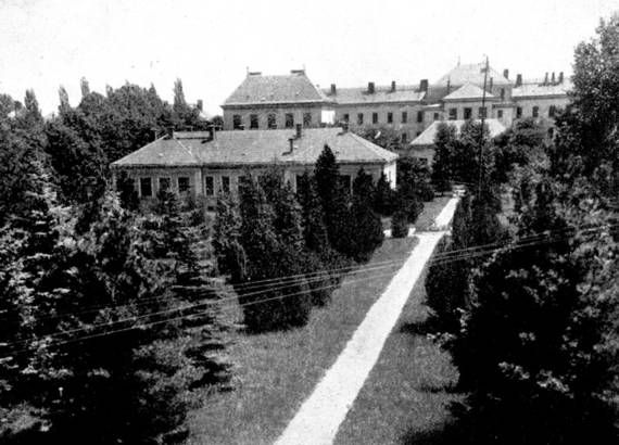 NYME Botanikus Kert: Régi képek a Botanikus Kertről Külföldi fenyők osztálya 1948-ban