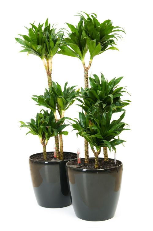 House Plants For Dark And Humid Rooms