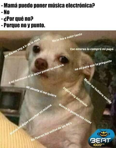 memes perro chihuahua - Buscar con Google