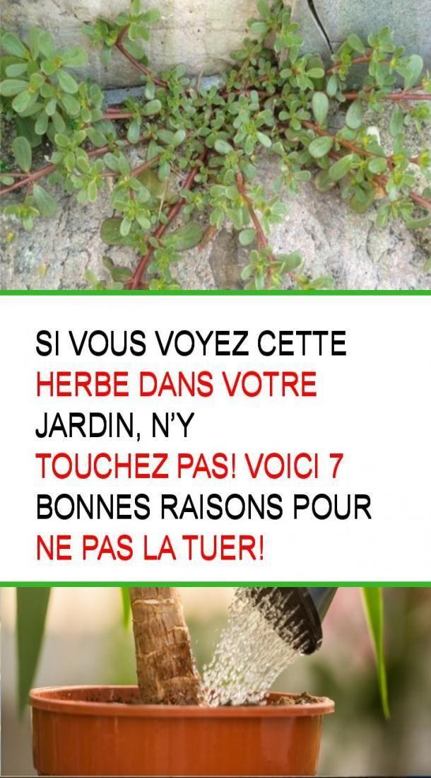Si vous voyez cette herbe dans votre jardin, n'y touchez pas! voici 7 bonnes raisons pour ne pas los angeles tuer!