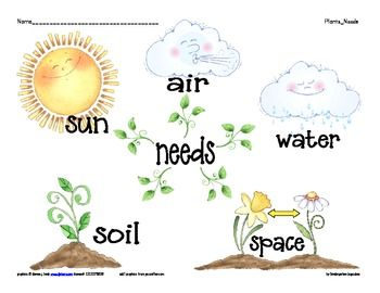Image result for basic needs of plants