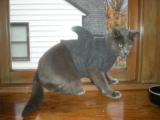 cats' Halloween costume.