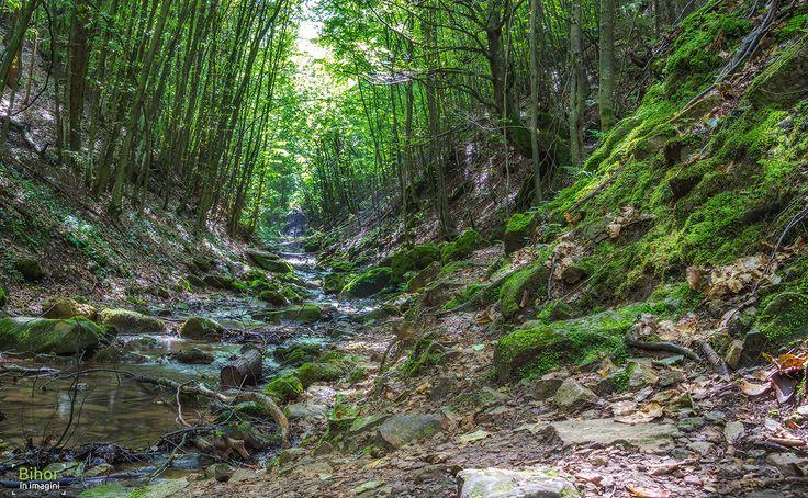 Valea și Cascada Boiului   Bihor in imagini