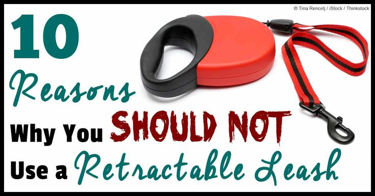 Dr. Becker: 10 Reasons Not to Use a Retractable Leash