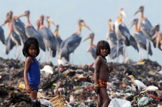Storks give up migration for landfill junk food