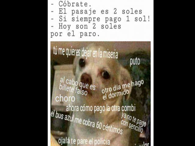 Viral: Memes del Chihuahua enojado se apodera de las redes sociales, Foto 9 | STUDIO 92
