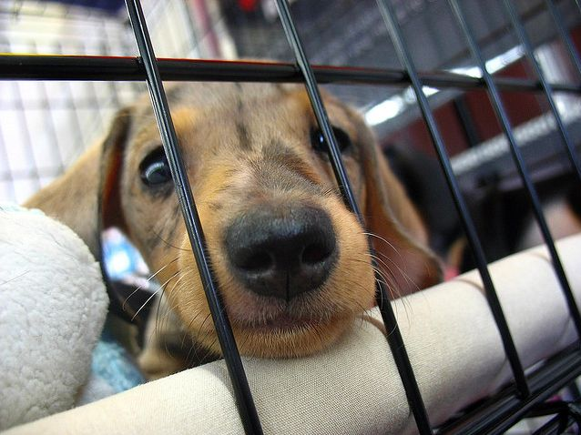 Under a new ordinance, pet stores opening in Brick Township, New Jersey will be prohibited from selling cats and dogs.