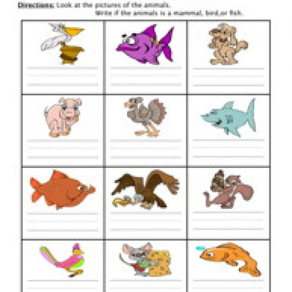 mammal fish bird worksheet science animal worksheets science worksheets animal classification. Black Bedroom Furniture Sets. Home Design Ideas