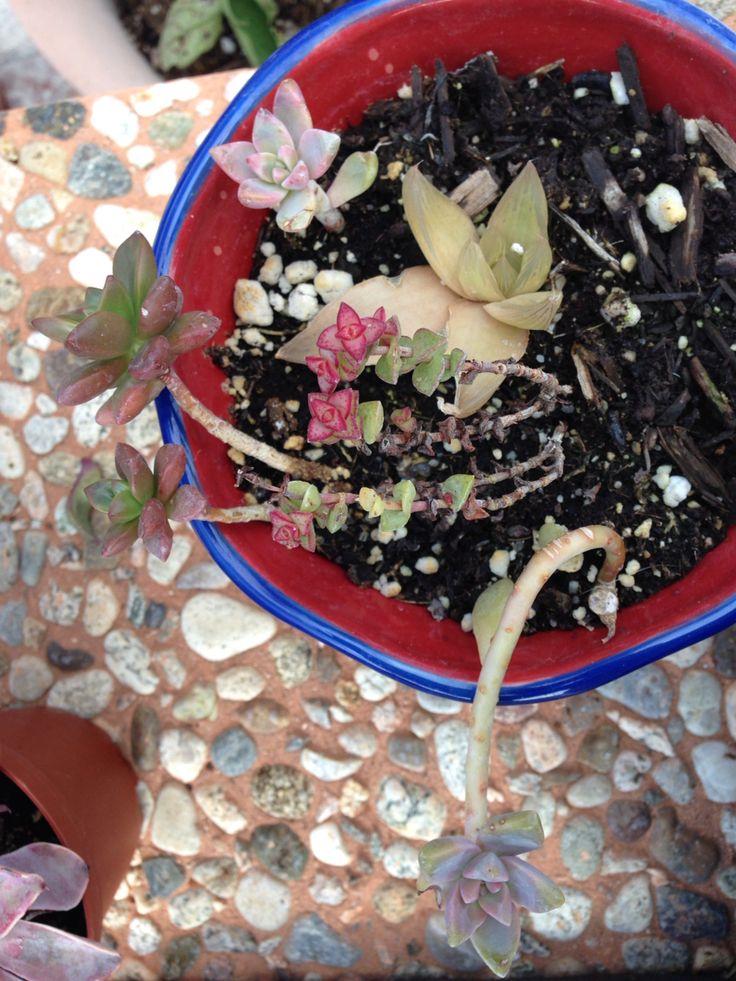Mini succulents #mine