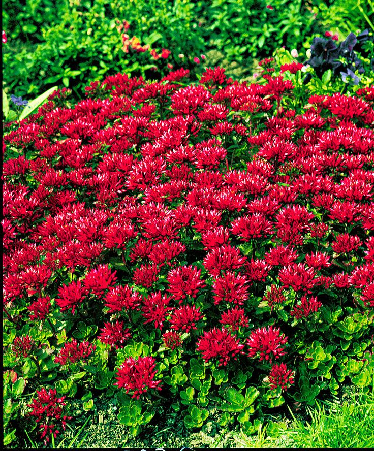 50 best Landscaping Shady Shrubs and Plants images on Pinterest