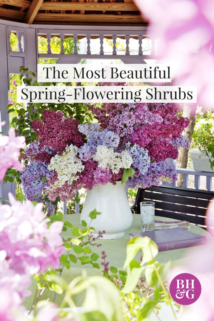 Incorporate color into your front yard or backyard with these beautiful flowering shrubs that bloom in the spring. This roundup includes everything from mountain laurel to camellia to witch hazel.  #springblooms #floweringshrubs #gardening