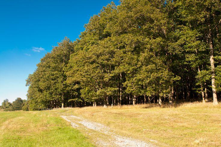 Banský Studenec (Kolpachy) Breziny - Teplý vrch