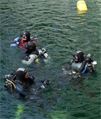 Dykkurs- vår