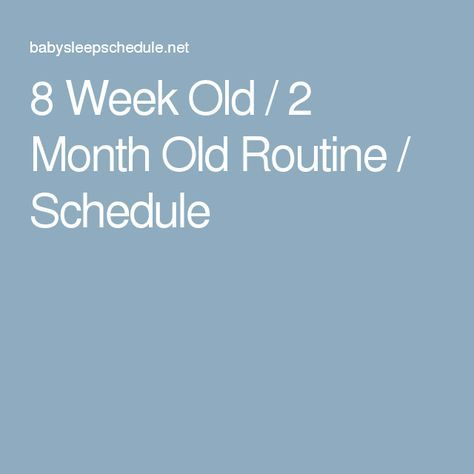 8 Week Old / 2 Month Old Routine / Schedule