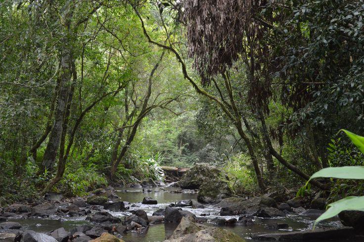 senderos por la selva