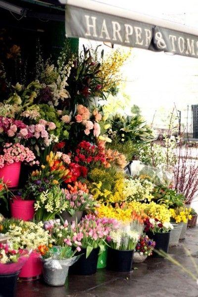 ✕ Beautiful flowers…