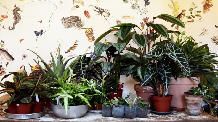 At Mama Petula in Paris, Flourishing Plants Are A Way of Life - Garden Collage