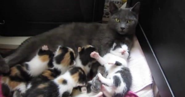 A Rescued Cat Gives Birth To 8 Tiny Kittens With Unique Fur