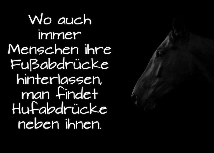 Pferdespruche Vertrauen Hier Ist Ein Pferdebild Mit Einem Schwarzen Pferd Mit Schwarzen Augen Und Mit Einem Tollen K Pferdespruche Pferde Bilder Reiterspruche